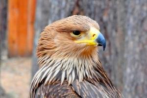 Холзан - заповедник хищных птиц
