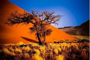 Групповой тур в Намибию с русскоговорящим гидом + водопад Виктория