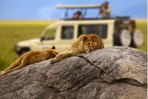 Лучшие парки Танзании