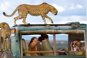Сафари-тур в Танзанию